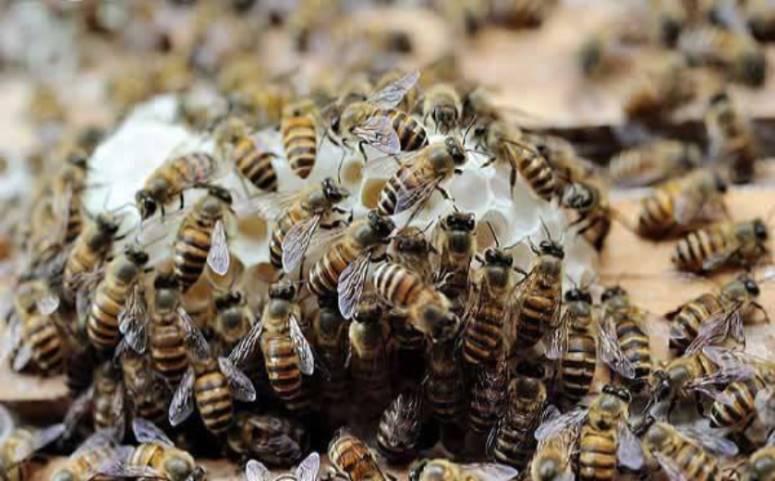 蜂蜜养殖行业图片