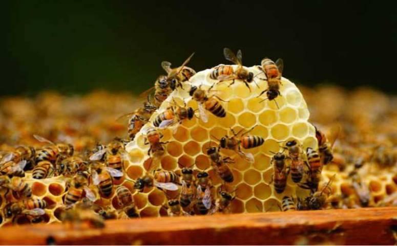 蜜蜂养殖图片