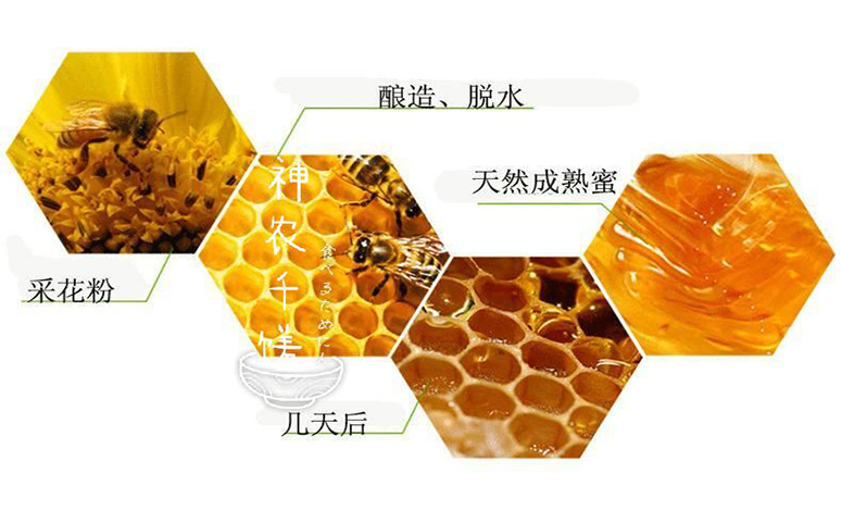 蜜蜂酿造蜂蜜的过程图片