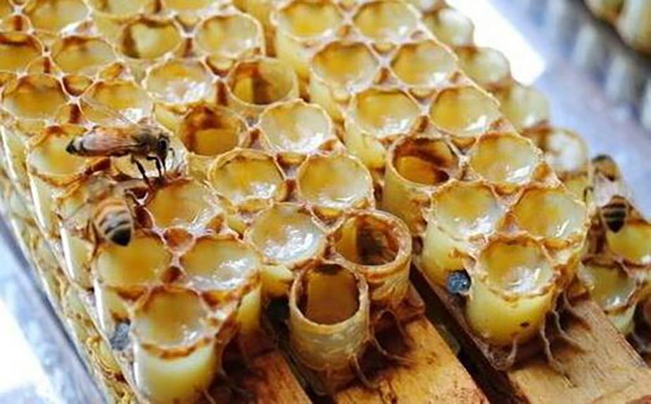 青年工蜂分泌蜂王浆图片