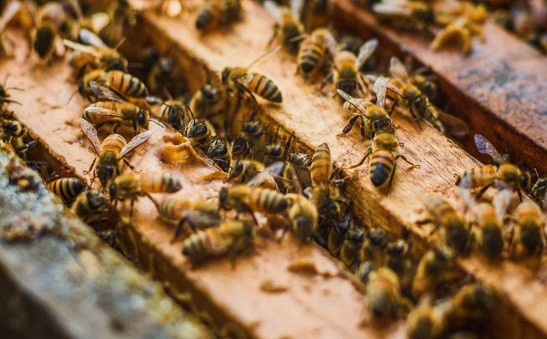 蜂蜜养殖图片