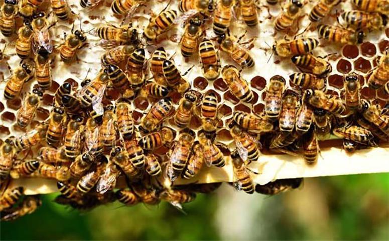蜜蜂养殖为什么很难赚钱图片
