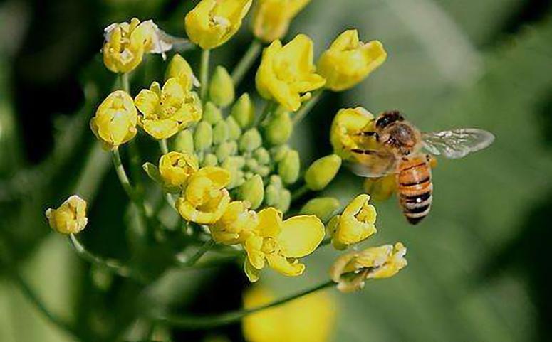 被蜜蜂蛰了要先检查伤口图片