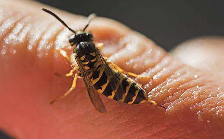 被蜜蜂蛰了要清理毒刺图片