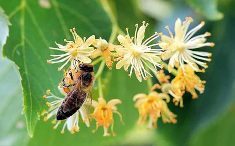 被蜜蜂蛰了怎么处理图片