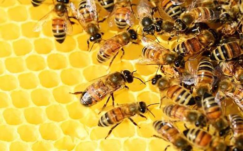 养蜂行业不被看好的原因图片