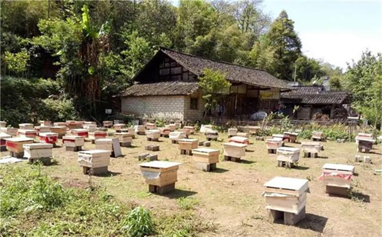 养殖蜜蜂防治蚂蚁垫高蜂箱的方法