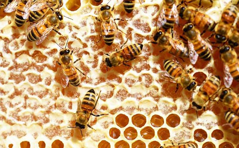 养殖蜜蜂防治蚂蚁喷洒药物图片