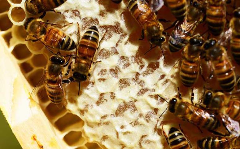 90后小伙靠养蜂致富带领村民一起脱贫图片