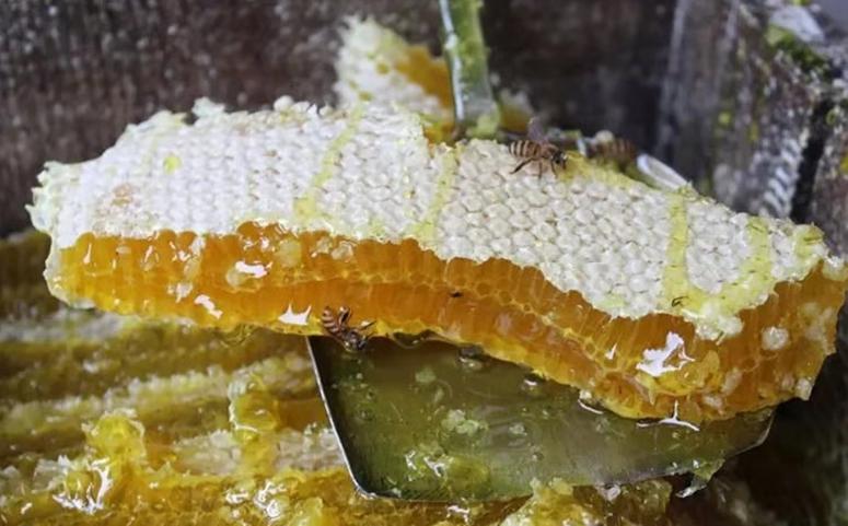 新土蜂巢蜜图片