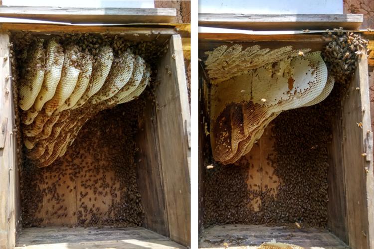 土蜂巢蜜蜂箱图片