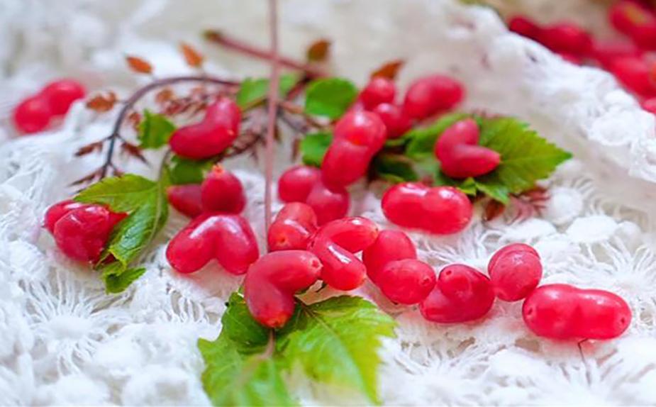 杈把果是不易保存的水果图片