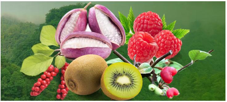 原生态农产品