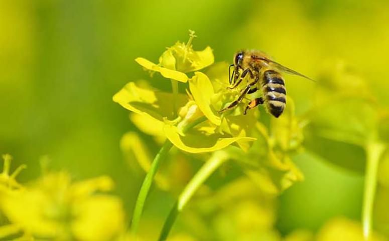 蜜蜂迷路了会怎样图片