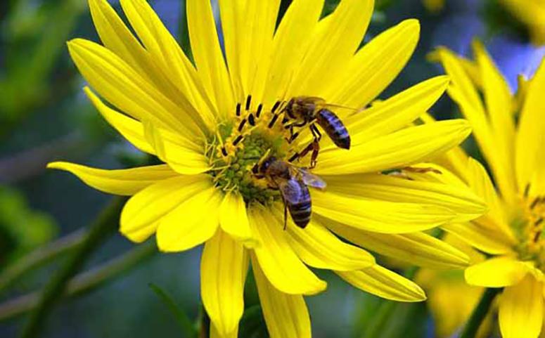 蜜蜂的天敌有哪些图片
