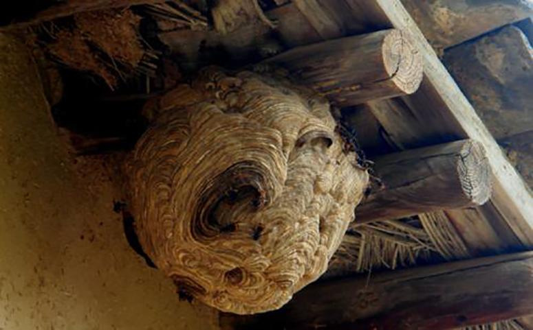 家里有蜜蜂窝该怎么处理图片