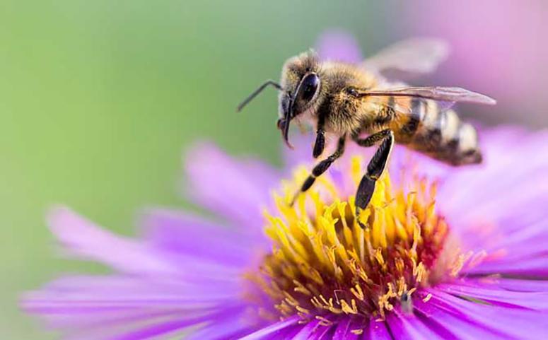 被蜜蜂蛰了会怎样介绍图片
