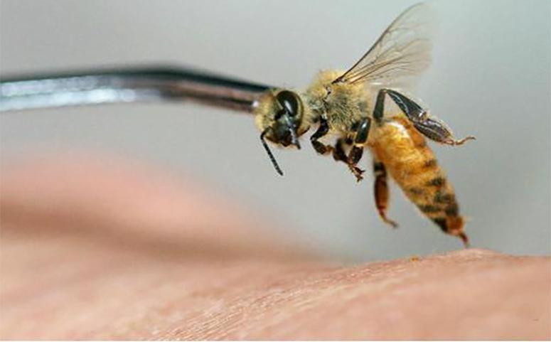 蜜蜂为什么会蜇人介绍图片