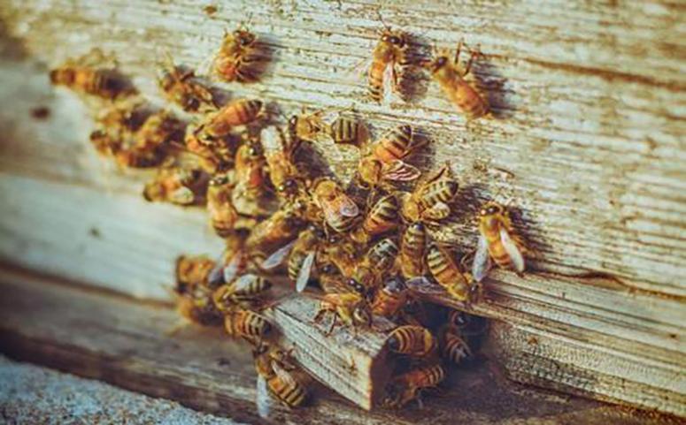 被蜜蜂蛰后怎么处理介绍图片