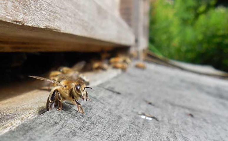 被蜜蜂蛰了大多数可以自愈介绍图片