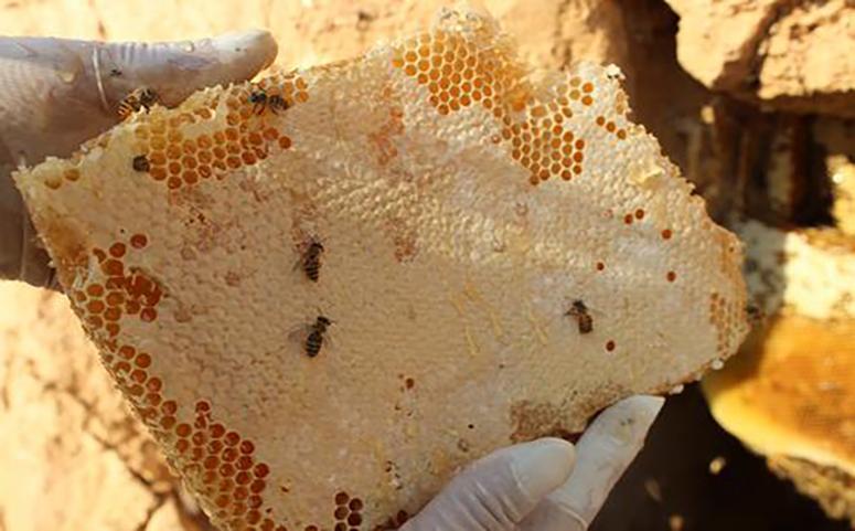 蜂巢蜜为什么那么甜图片