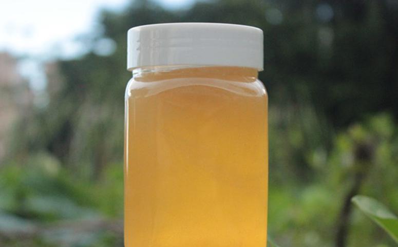 野桂花蜜是凉性还是热性图片