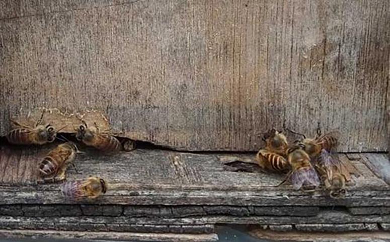 蜂蜜破损后错误的修补方法介绍图片