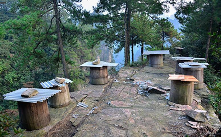 在冬季移动蜂箱蜜蜂不会出现返巢情况的原因图片
