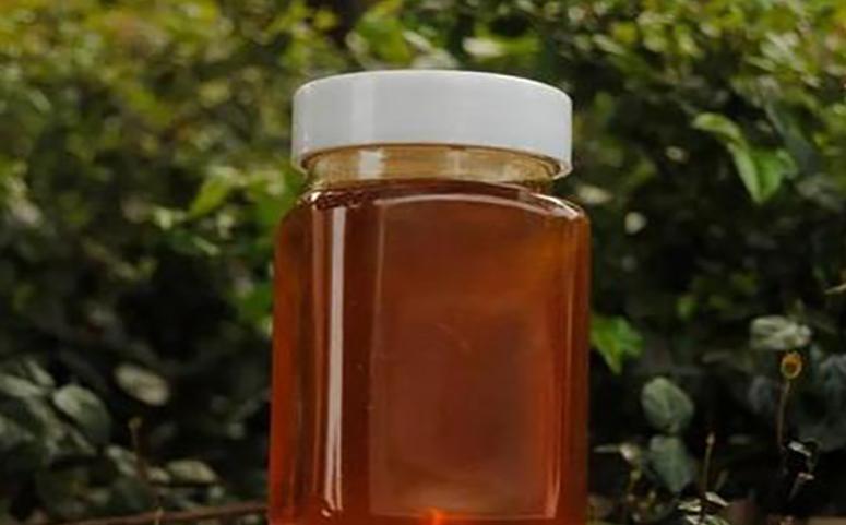 桉树蜜是几等蜂蜜介绍图片