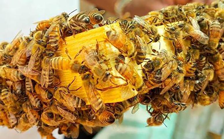 蜜蜂绑脾过箱技术介绍图片