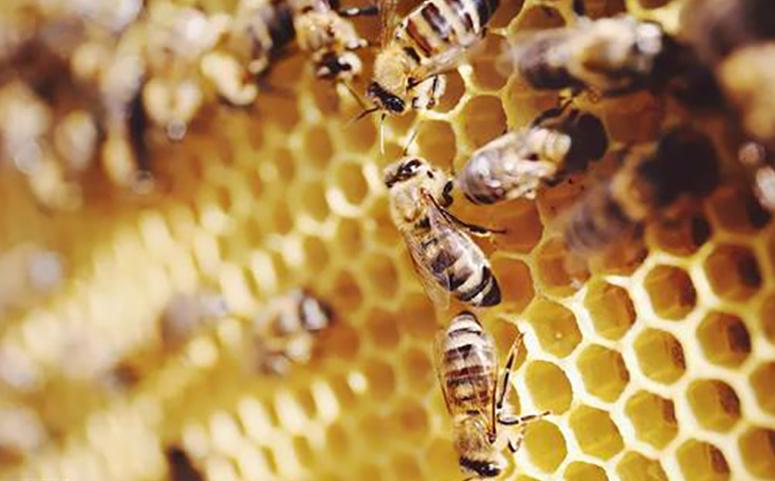 蜜蜂巢脾图片