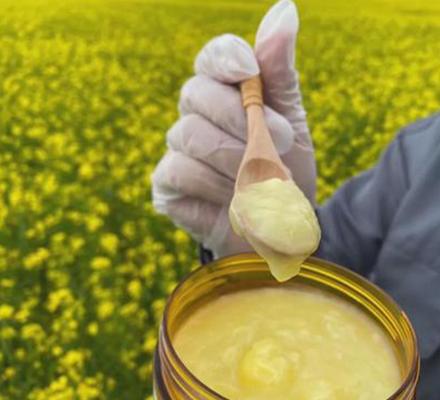 油菜花春浆图片