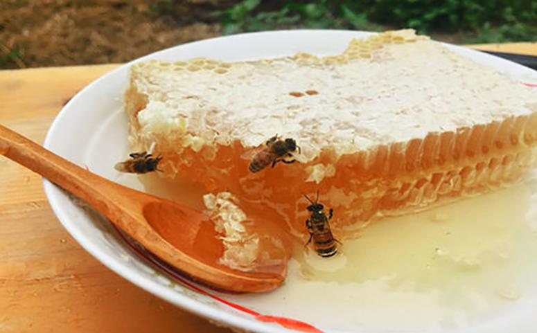 蜂巢蜜图片