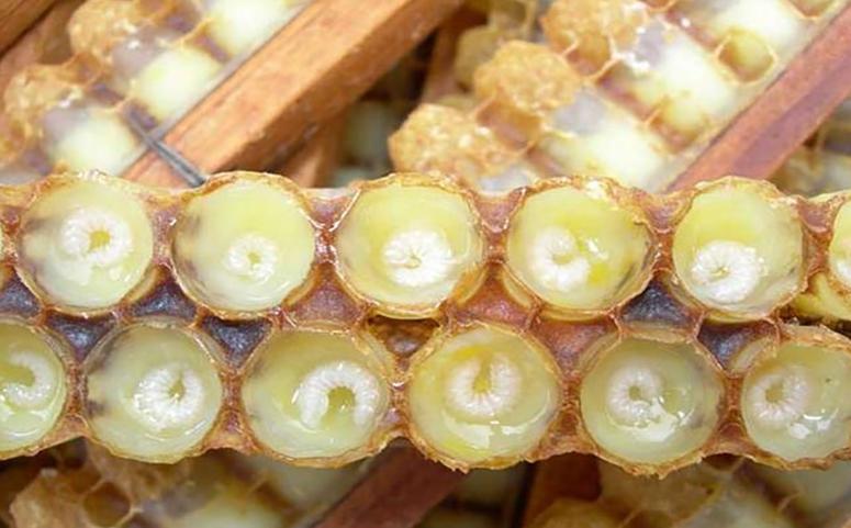 蜂王浆图片